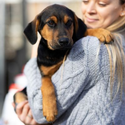 SPCA Puppy Adoption