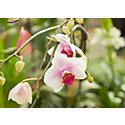 Blooming Spotlight: Orchids
