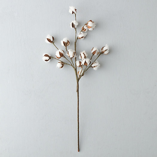 View larger image of Dried Cotton Stem
