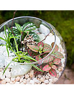 Late Summer Terrariums