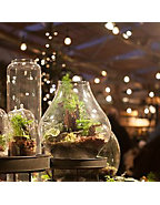 Girls Night Out Harvest Terrarium