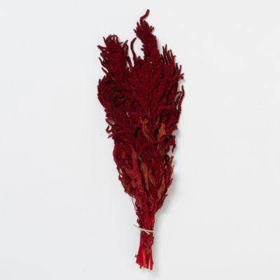 Hanging Crimson Amaranth Bunch