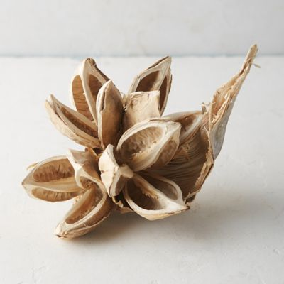 Dried Star Pod