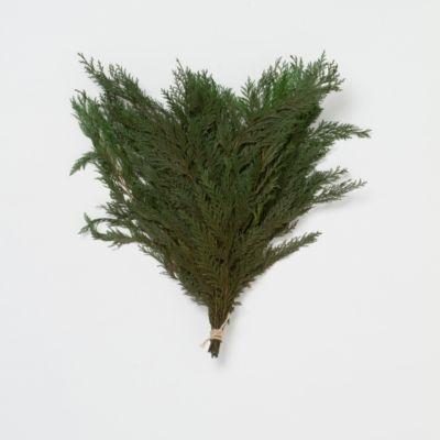 Preserved Cedar Bunch