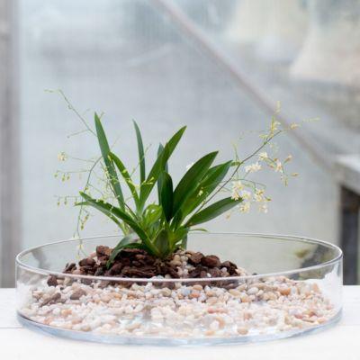 Circumference Planter
