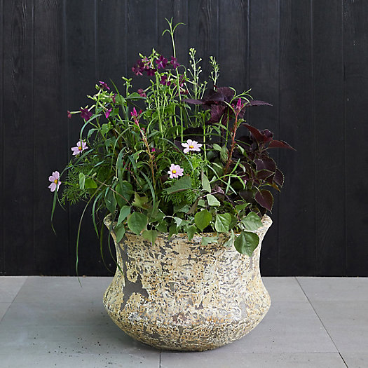 View larger image of Barnacle Lotus Pot