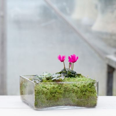 Angles Terrarium, Low Square