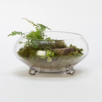 Footed Bowl Terrarium