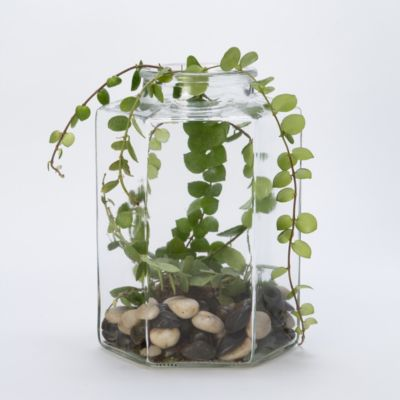 Candy Jar Terrarium, Hexagon