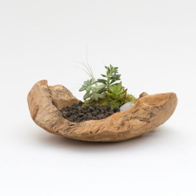 Carved Teak Bowl Planter