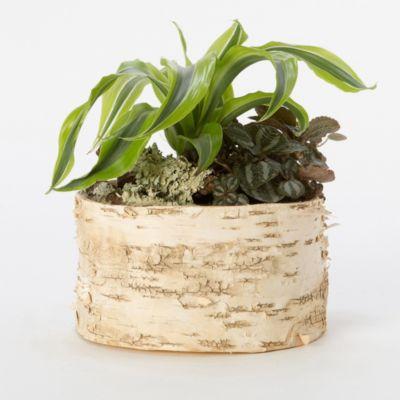 Birch Cylinder Pot