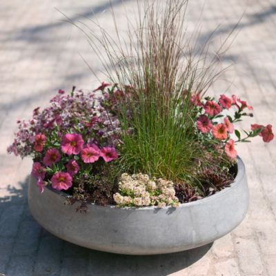 Straight Side Bowl Planter, Medium/Large