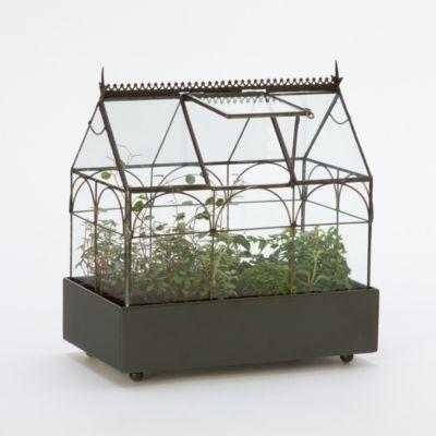 Edwardian Case Terrarium