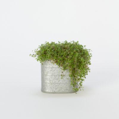 Zinc Round Corner Pot, Medium