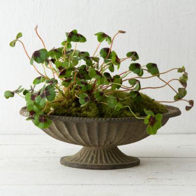 'Aged Iron Pedestal Bowl, 14'