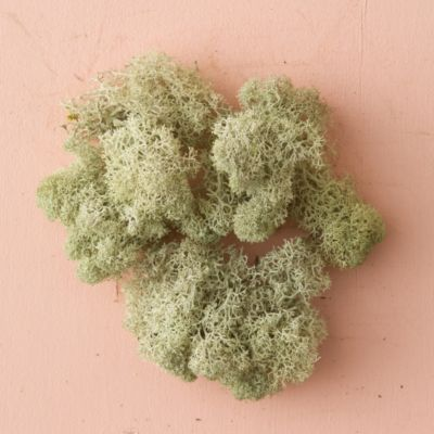 Preserved Reindeer Moss, Natural