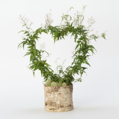 Potted Jasmine Heart Wreath