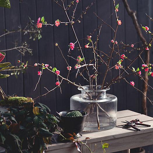 View larger image of Salmon Quince Branches