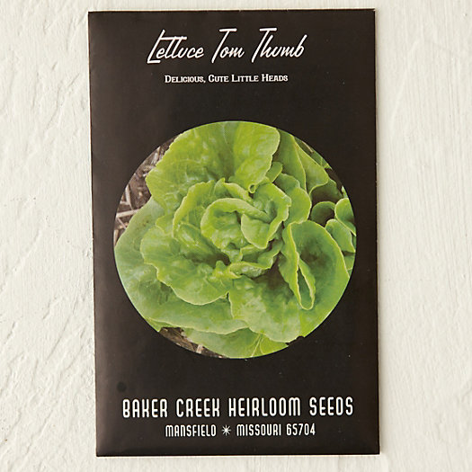View larger image of Tom Thumb Lettuce Seeds