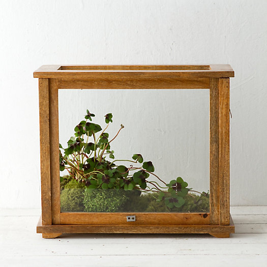 View larger image of Specimen Case Terrarium