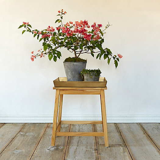 View larger image of Protected Teak Plant Stand, Low