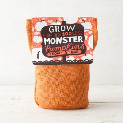 Pumpkin Grow Kit