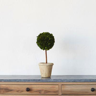 Preserved Boxwood Sphere Topiary