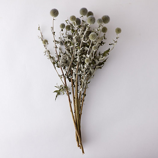 View larger image of Dried Echinops Bunch