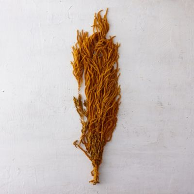 Hanging Golden Amaranth Bunch