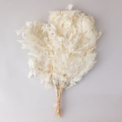 Preserved + Bleached Oak Leaf Bunch