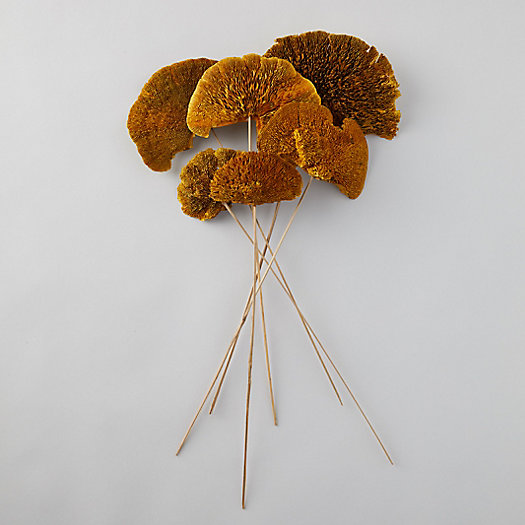View larger image of Dried Sponge Mushroom Bunch