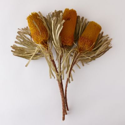 Dried Banksia Bunch