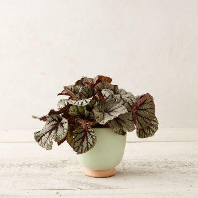 Chalked Clay Urn