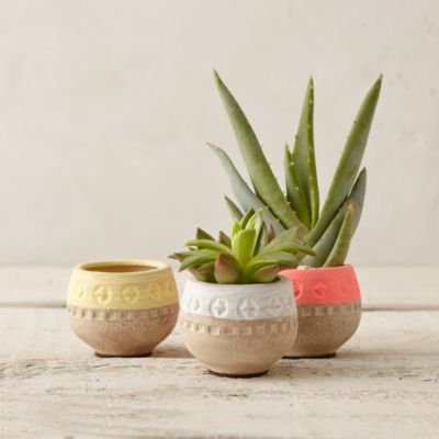 Colorblocked Mini Bowl Planter, 3""
