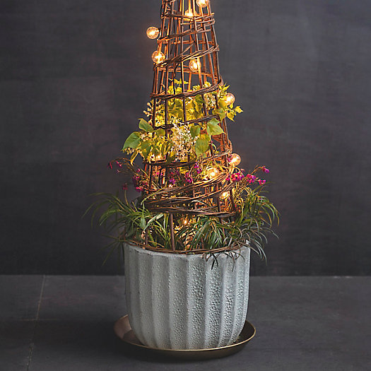 View larger image of Shop the Look: Garden Structure Container Planting, Glowing + Sophisticated