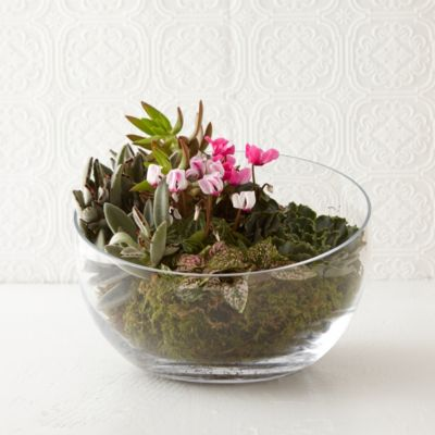 Angled Bowl Terrarium