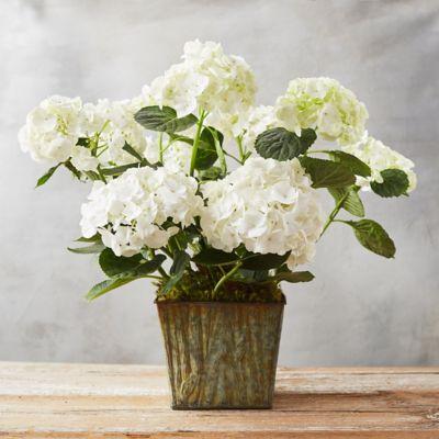 White Hydrangea, Woodgrain Pot