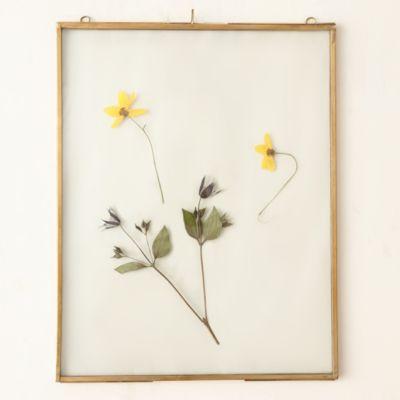 Brass Specimen Frame, Extra Large
