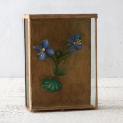 Garden Pine Shadowbox