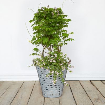 Olive Basket Planter, 14""