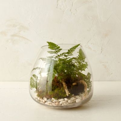 Polished Drop Terrarium