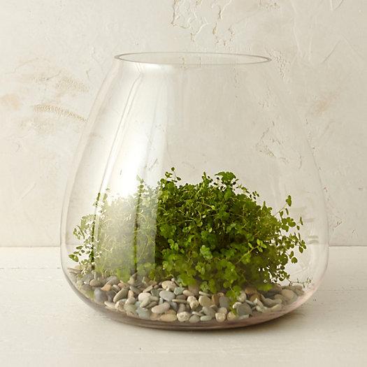 View larger image of Polished Drop Terrarium
