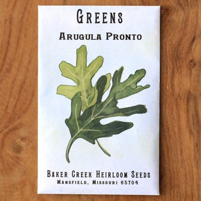 Arugula Pronto Seeds