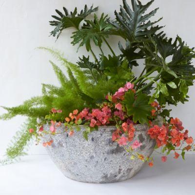 Barnacle Garden Bowl