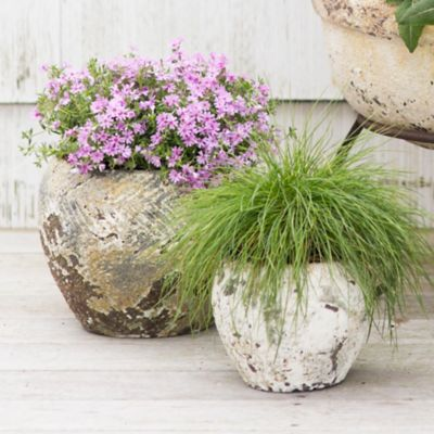 Barnacle Round Shoulder Pot