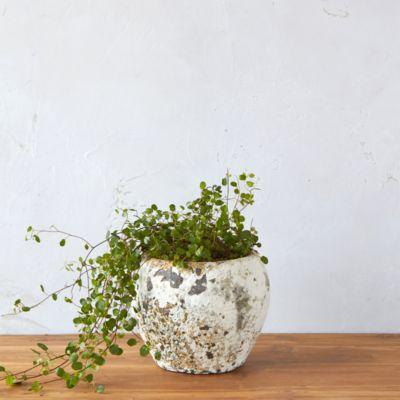 Barnacle Round Shoulder Pot
