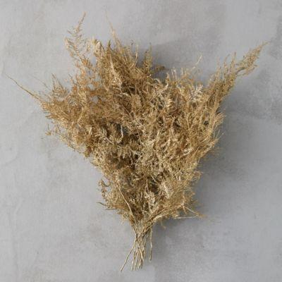 Preserved Plumosa Fern Bunch