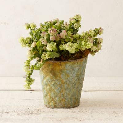 Quilted Pot Flowering Oregano