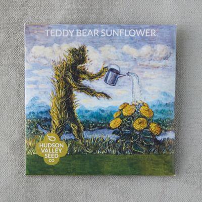 Teddybear Sunflower Seeds