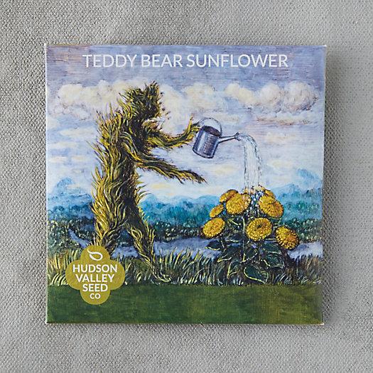 View larger image of Teddybear Sunflower Seeds